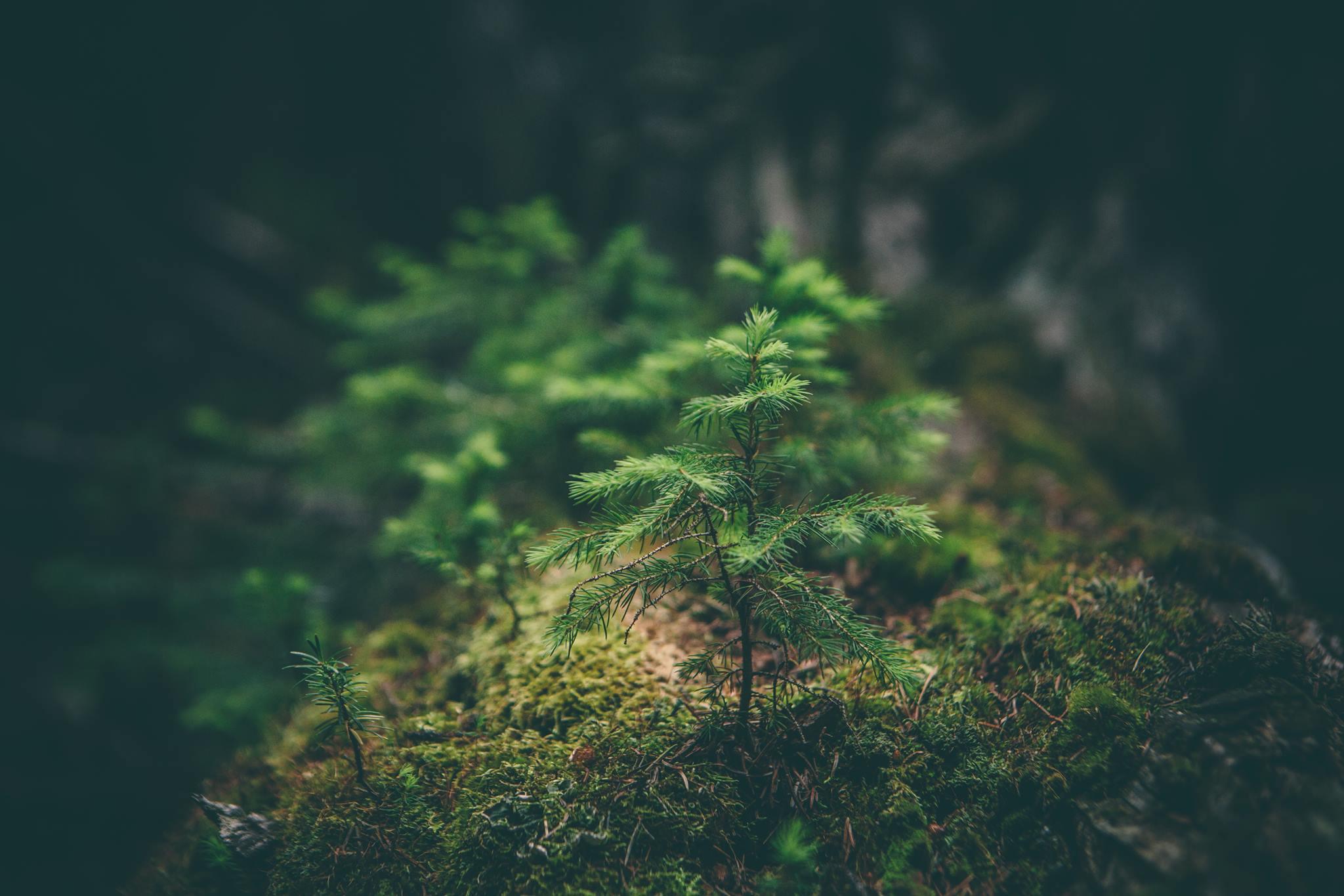 Evergreen – Active Summercamp 2017